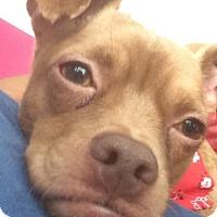 Adopt A Pet :: Benny - St Louis, MO