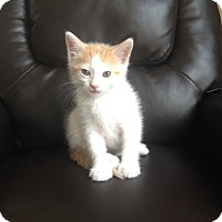 Adopt A Pet :: Chips SH - Schertz, TX