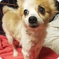 Adopt A Pet :: Tina - Kenosha, WI