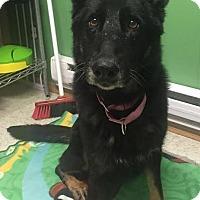 Adopt A Pet :: Lady - Toronto, ON