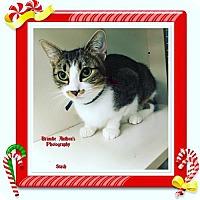 Adopt A Pet :: Stash - ROSENBERG, TX