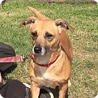 Adopt A Pet :: Buffy - Allentown, PA