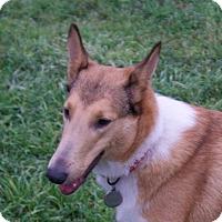 Adopt A Pet :: Marti - Sugar Land, TX