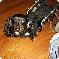 Adopt A Pet :: MACI - Georgetown, KY