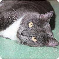 Adopt A Pet :: Carmen - Metairie, LA