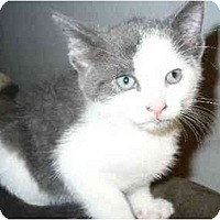 Adopt A Pet :: Max - Secaucus, NJ