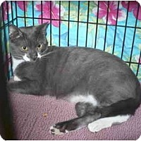 Adopt A Pet :: Gart - Colmar, PA