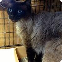 Adopt A Pet :: Arriva - Ennis, TX