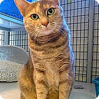 Adopt A Pet :: Clara - Victor, NY