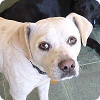Adopt A Pet :: MURPHY - Paron, AR