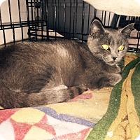 Adopt A Pet :: Iris - Alden, IA
