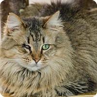 Adopt A Pet :: Linda 14174 - Atlanta, GA