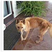 Adopt A Pet :: Honey - Cranston, RI