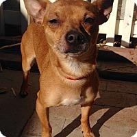 Adopt A Pet :: Geronimo - Santa Ana, CA