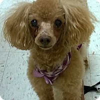 Adopt A Pet :: Sissy with Roxie 2 - Cary, NC