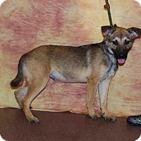 Adopt A Pet :: A582231 - Louisville, KY