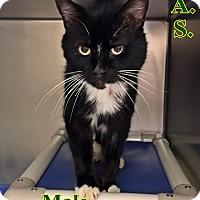 Adopt A Pet :: B-4 - Triadelphia, WV