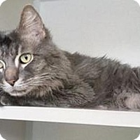Adopt A Pet :: Merrill - Hudson, NY
