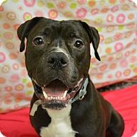 Adopt A Pet :: Kobe - Troy, MI