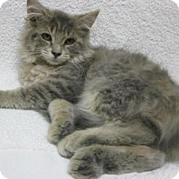 Adopt A Pet :: Snickerdoodle - Gary, IN