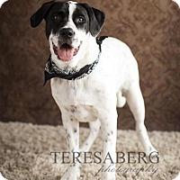 Adopt A Pet :: Caden - McKinney, TX