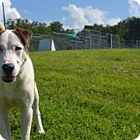 Adopt A Pet :: Kenny - Rexford, NY