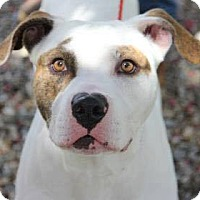 Adopt A Pet :: Rufus - Greensboro, NC