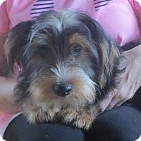 Adopt A Pet :: Tug Boat - Salem, NH
