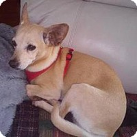 Adopt A Pet :: Daisy Mae - Shallotte, NC