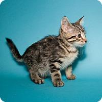 Adopt A Pet :: Peanut - Jersey City, NJ