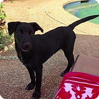 Adopt A Pet :: OCTAVIA - Nashville, TN