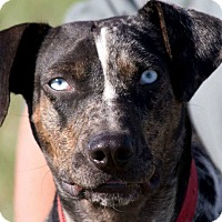 Adopt A Pet :: Scarlett - Broken Arrow, OK