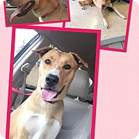 Adopt A Pet :: Linda Lou - Scottsdale, AZ