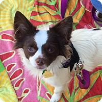 Adopt A Pet :: Niko - Fremont, CA