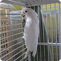 Adopt A Pet :: Bogie - Edgerton, WI