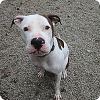 Adopt A Pet :: Ruger - Providence, RI