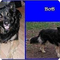 Adopt A Pet :: Bob - Hamilton, ON