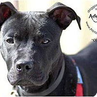 Adopt A Pet :: Coleman - Accord, NY