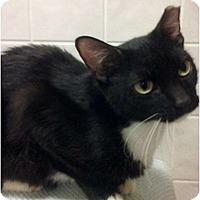 Adopt A Pet :: Sybul - Lakeland, FL