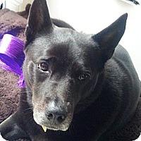 Adopt A Pet :: MONICA - Vista, CA