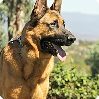 Adopt A Pet :: Seth - Laguna Niguel, CA