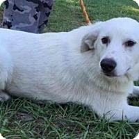 Adopt A Pet :: Chance - Dumfries, VA