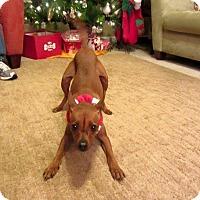 Adopt A Pet :: Cherilee-video! -- Athens, GA - Atlanta, GA