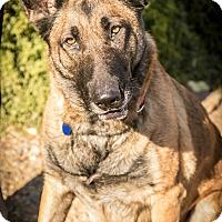 Adopt A Pet :: Kesley - Phoenix, AZ