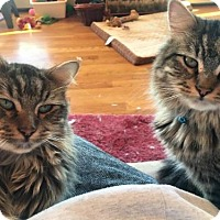 Adopt A Pet :: Mickey & Donald - Absecon, NJ