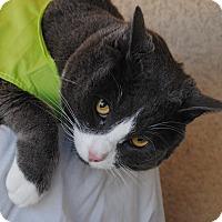 Adopt A Pet :: Emmett - Palmdale, CA