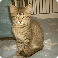Adopt A Pet :: TATE - Medford, WI