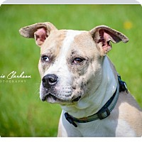 Adopt A Pet :: Heineken - RESCUED! - Zanesville, OH