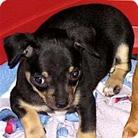 Adopt A Pet :: Andie - San Diego, CA