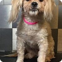 Adopt A Pet :: Curves - McKinney, TX